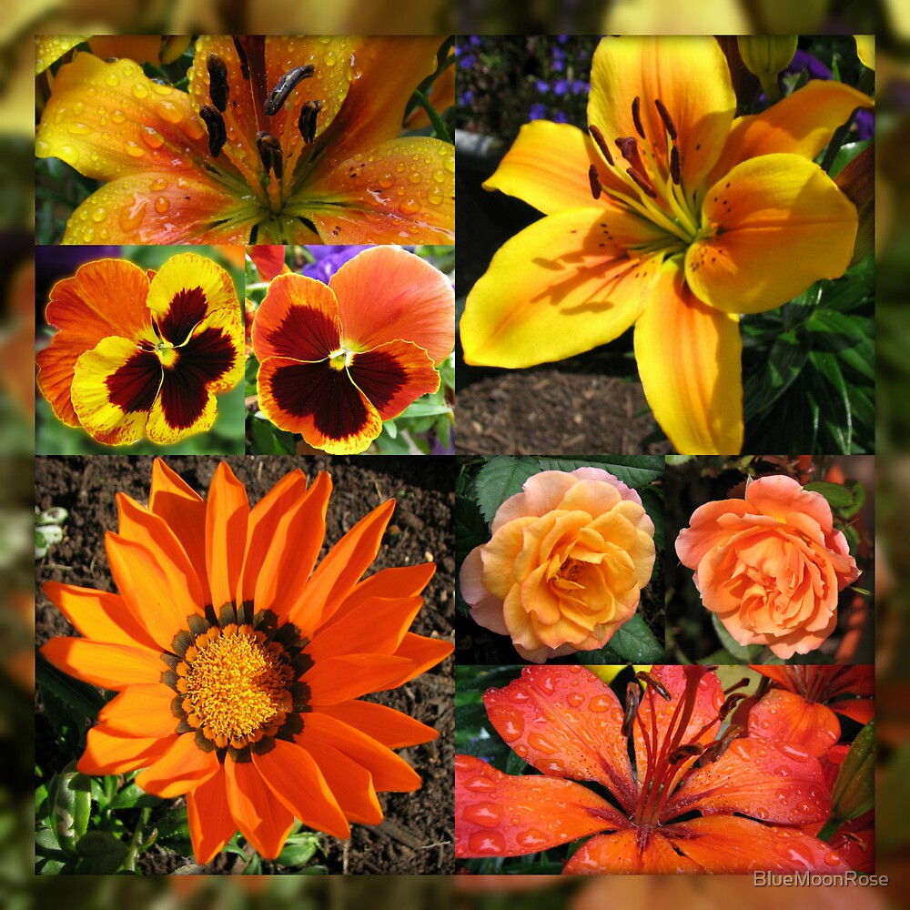 Blossoms of Fire Collage by BlueMoonRose