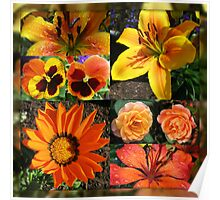 Blossoms of Fire Collage Poster
