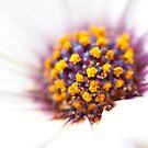 Blossom by fotoholic