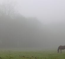 Enshrouded in a cloak of fog by Stephen J  Dowdell
