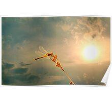 The Sun Dragon  Poster