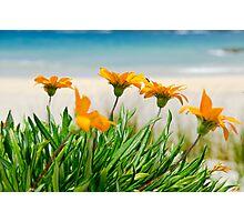 Orange flowers on the Sunny Ocean Beach Photographic Print