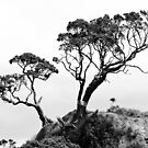 Two Trees in Black and White by yurix