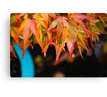 Leaf Fringe Canvas Print