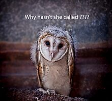 Why hasn't she called ???? by Pene Stevens