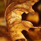 Gold Leaf by reindeer