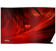 Waterdrop on Red Feather Poster