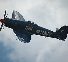 Sea Fury @ Temora Warbirds Airshow 2011 by muz2142