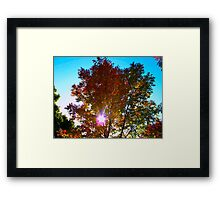 Autumn levity Framed Print