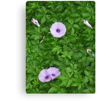 Adorable pink beauties Canvas Print
