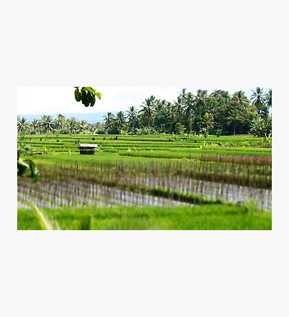 Hut Among the Rice Fields Photographic Print