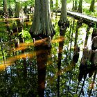 looking glass world in a vernal pool... Ohio by WonderlandGlass