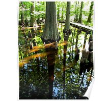 looking glass world in a vernal pool... Ohio Poster