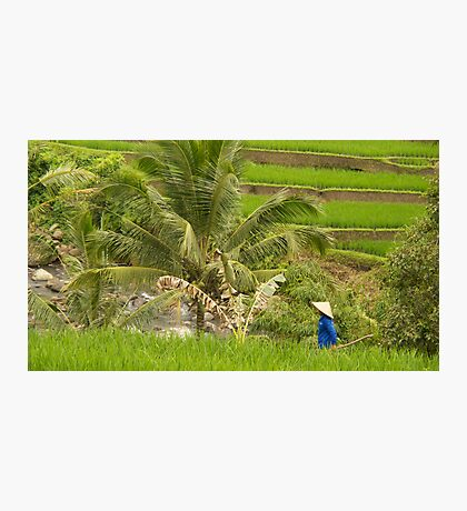 Rice Worker Photographic Print