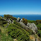 The Coastal View from Bluff New Zealand by Alison Murphy