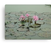 A trio of pink beauties Canvas Print