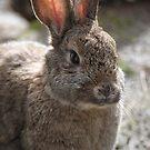 I love bunnies. by Katastrophuck