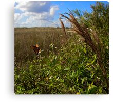 Everglades Butterfly Canvas Print