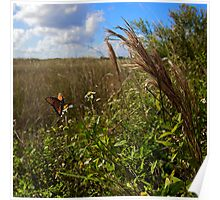Everglades Butterfly Poster