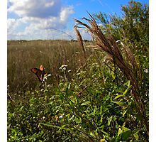 Everglades Butterfly Photographic Print