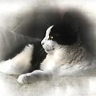 Sushi's Winter Place by Chris Armytage™