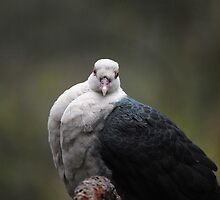 Not sure if pigeon or dove.. by Katastrophuck