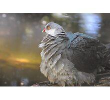 Definitely a pigeon Photographic Print