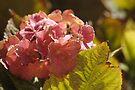 Rusty petals by Katastrophuck