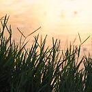 Sun set by Katastrophuck