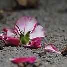 Fallen petals by Katastrophuck