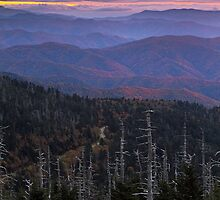 Autumn in the Appalachians - Clingman's Dome, NC/TN by Matthew Kocin