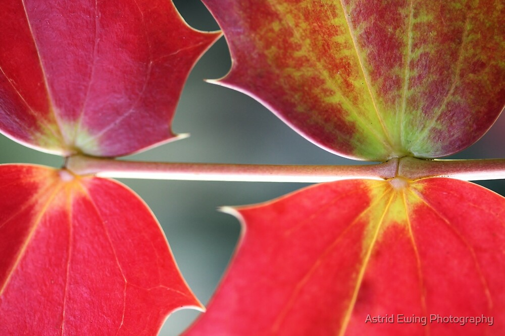 Autumn Kisses by Astrid Ewing Photography