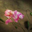 Sweet Pea by Carol Bleasdale