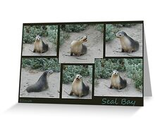 Seal Bay Greeting Card