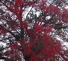 Flame Trees Will Blind The Weary Driver~ by CeciliaMay