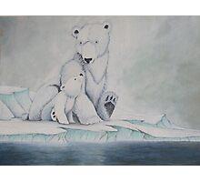 Pola bears Photographic Print