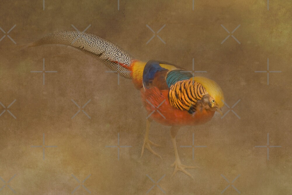 Golden Pheasant by Catherine Hamilton-Veal  ©