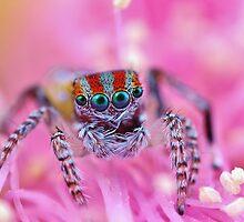 spider-land 1 by fishnrobo