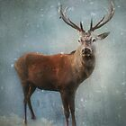 Winter Stag by Carol Bleasdale