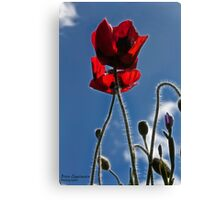 Poppies in the Afternoon Canvas Print