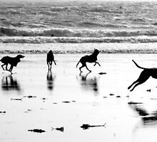 Sighthounds Are Special by Sally J Hunter