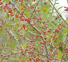 Red Fruit Evoke Holidays by Navigator