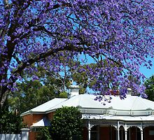 Guildford jacaranda by nadine henley