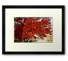 Surreal trees Framed Print