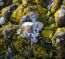 Calgary Beach Isle of Mull ~ Rock with Lichen by albyw