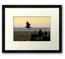 The black crow Framed Print