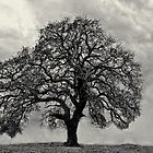 My Favorite Tree (B&W Version) by Carolyn  Fletcher