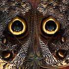 Owl Butterfly, Caligo by Guy Tschiderer