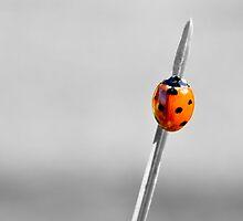 Ladybird by photomatisme