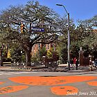 Toomer's Oaks in Auburn by mountainshadows